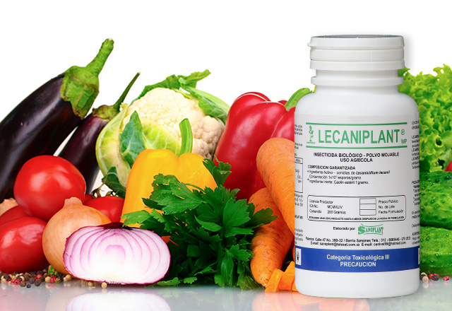 lecaniplant