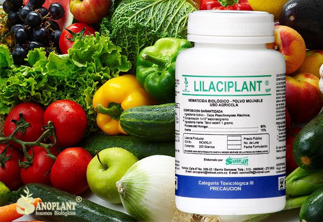 lilaciplant